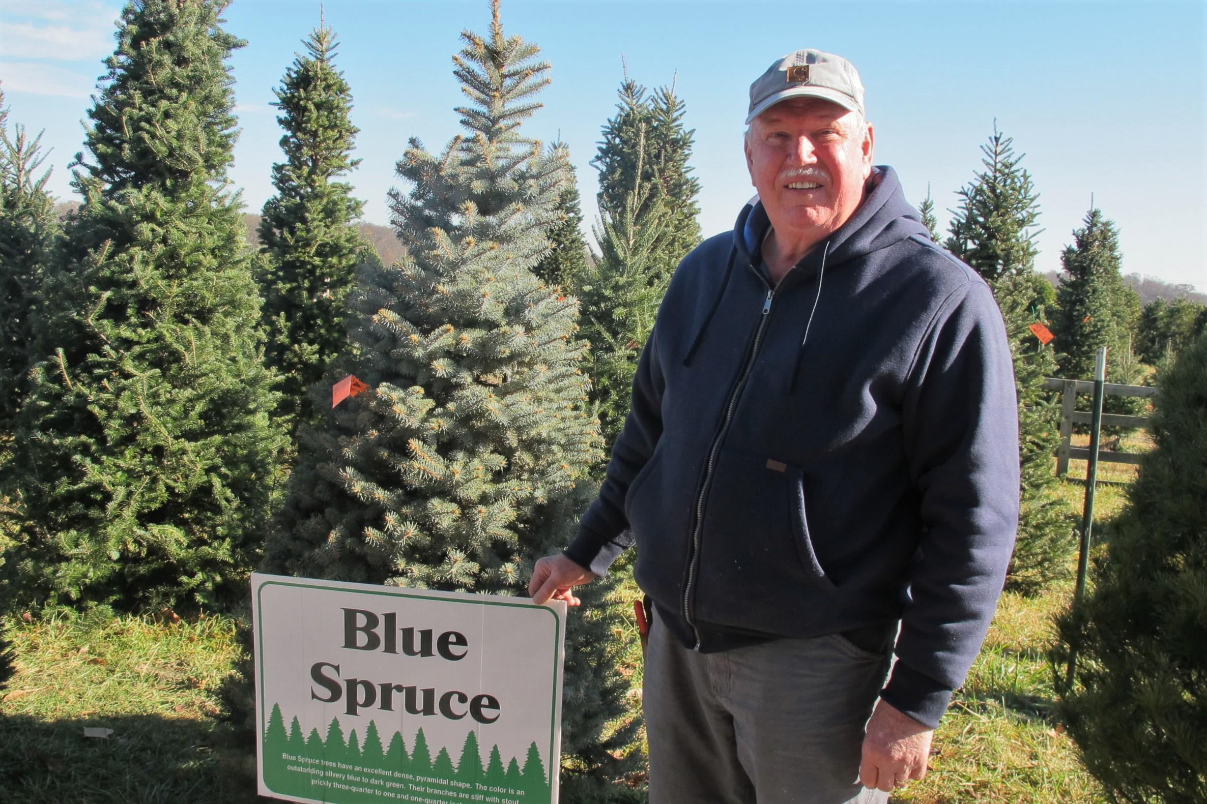 william cackler of the ohio christmas tree association grows 20000 trees on his cackler family farms