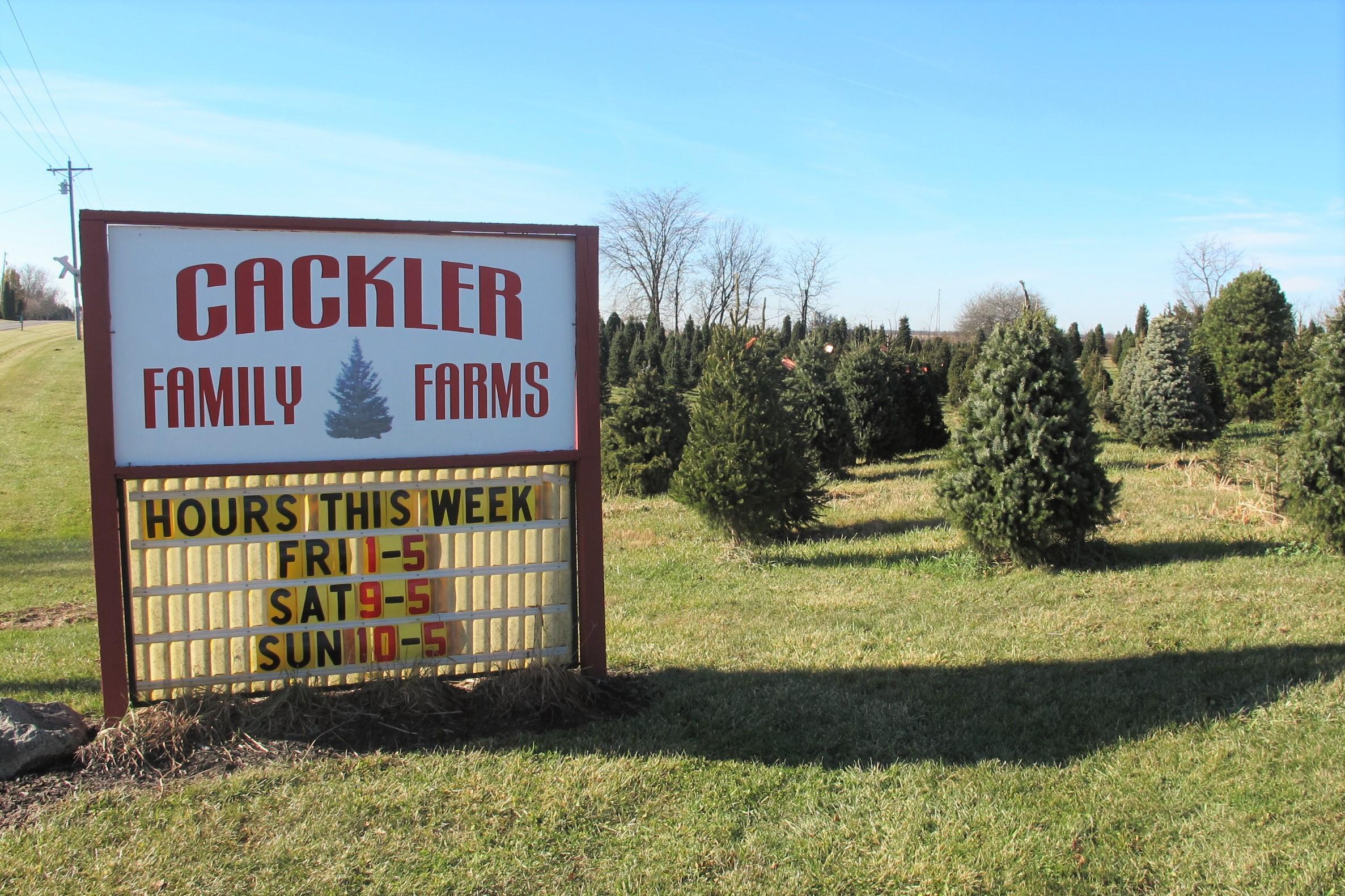 Timber! Christmas Tree Farms Topple Around Central Ohio   WOSU Radio