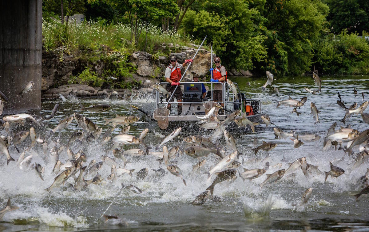 As Asian Carp Invade Tennessee, The State Asks Fishermen To Help Fight Back  | Nashville Public Radio