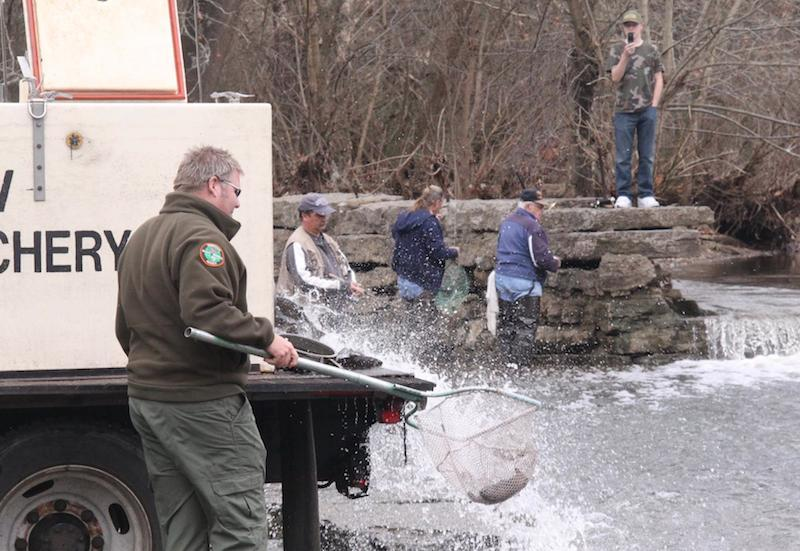 A TWRA agent releases trout at Nice's Mill in Smyrna. The agency says it has stocked 100 million fish in Tennessee and manages 1.5 million acres of publicly accessible land.