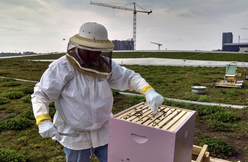 Music City Center rooftop bees