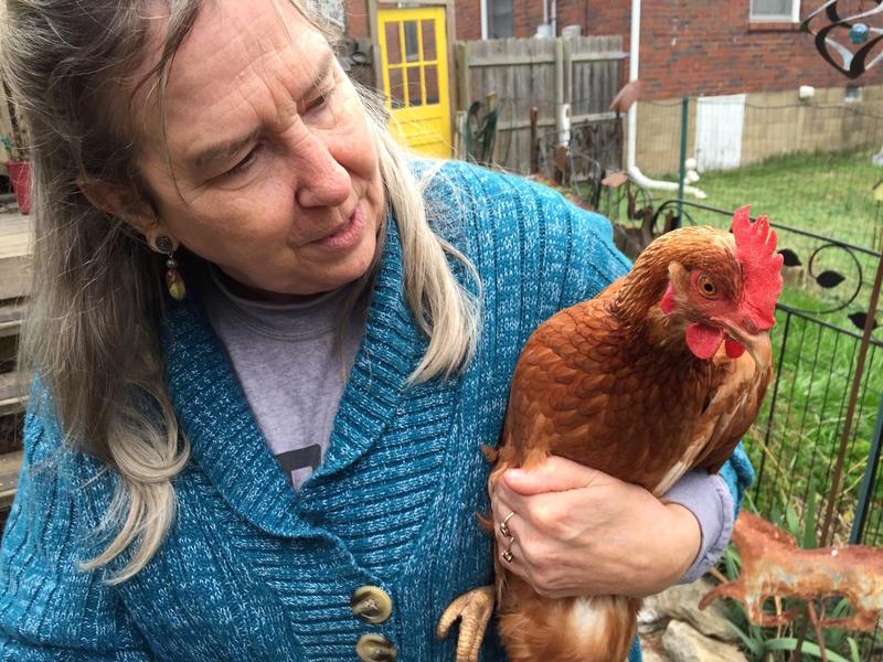 urban chickens Nashville