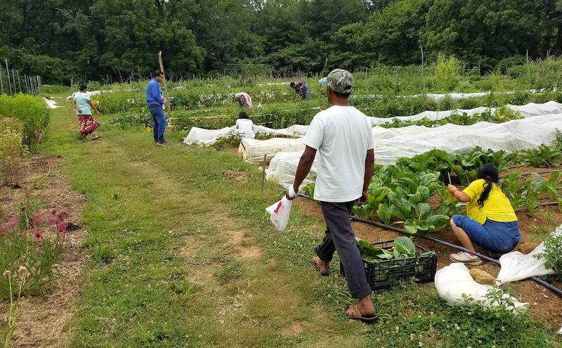 Refugees from Bhutan and Burma work plots in a community garden that sells to Nashville farmer's markets and restaurants.