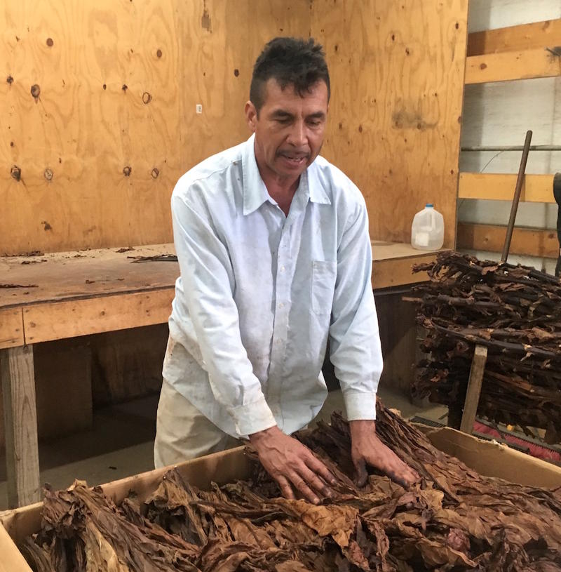 Javier Solis explains this is the box of the best tobacco leaves, to be used for cigar wrappers.