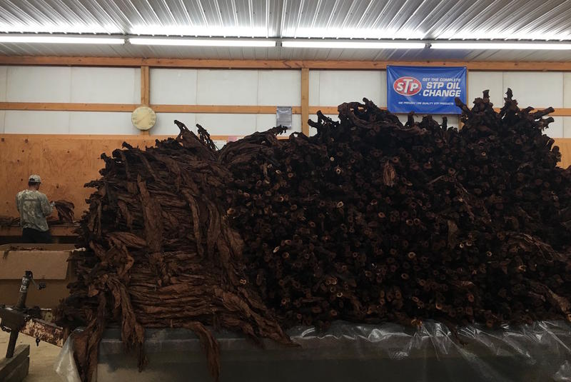 Several thousand pounds of tobacco leaves ready to be stripped, for snuff or cigars.