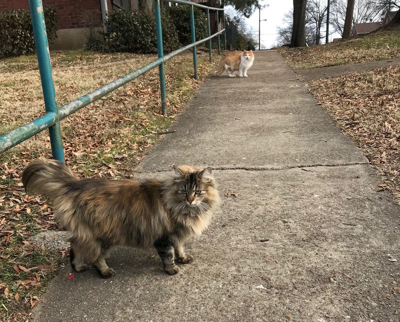 Lizzie, front, and Darcy, rear, are two cats being cared for by MDHA employees. They're at the center of a debate inside the agency about whether employees should be allowed to care for animals that roam its properties.