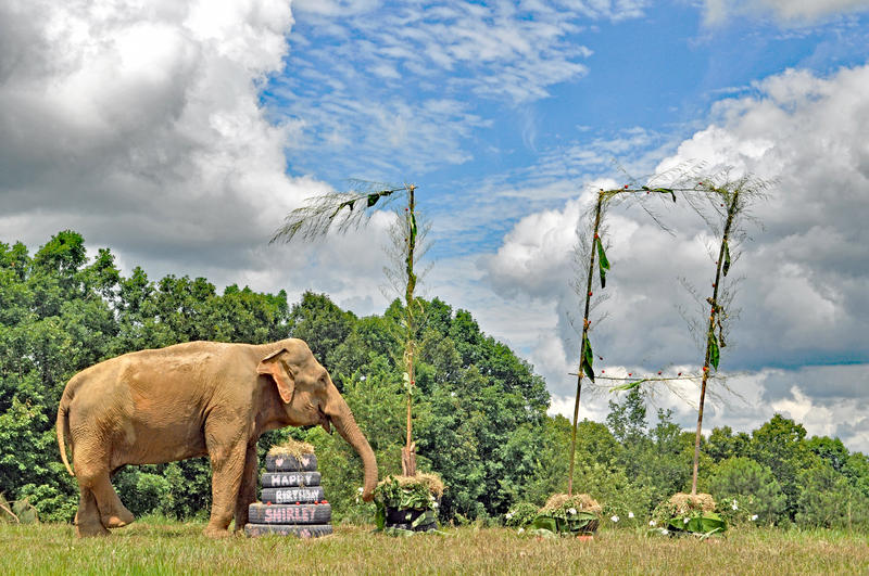 Shirley elephant sanctuary