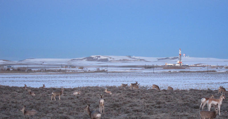 Deer and antelope mingle in the Pinedale Anticline natural gas field.