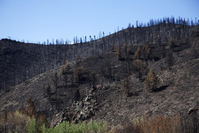 Landscape after the Squirrel Creek Fire in Southeast Wyoming was extinguished.