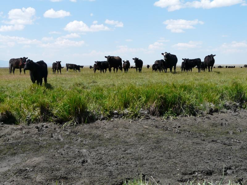 The creeks that Orville Johnson's cows would normally drink from are dry this year.