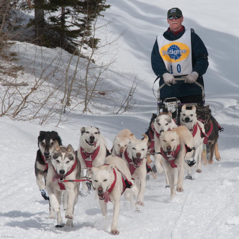 Lander musher offers a glimpse into the world of dog sled ...