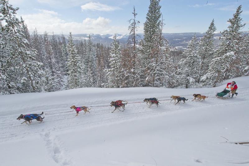 Annual dog sled race expands to four states | Wyoming ...