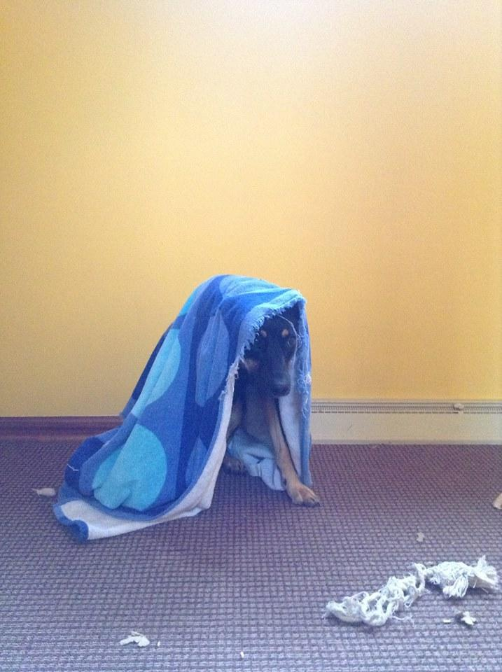 Saga, hiding from the news (and the world).