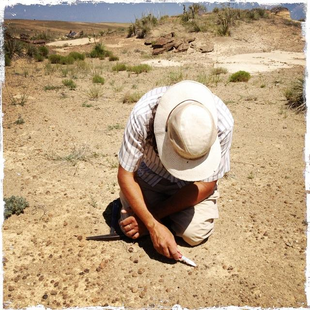 JP Cavigelli looks for small fossils on a private ranch, near Lusk.