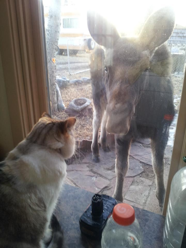 Here is one of our kitties and a visitor in our back yard.