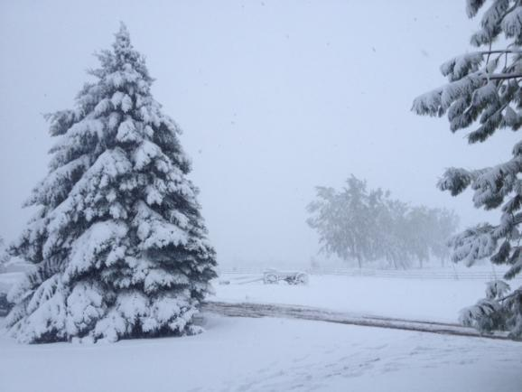 A big snow storm hit the night before the hunt, delaying teams the next morning