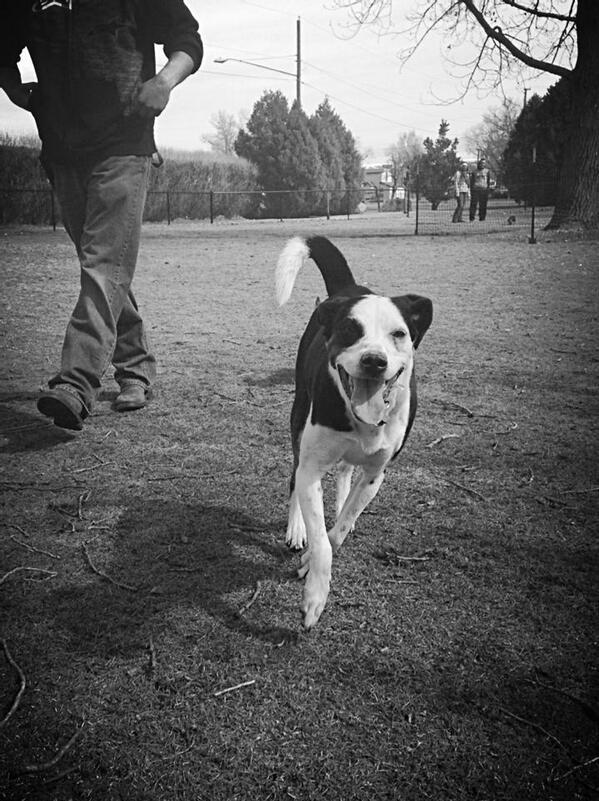 For Pet Wednesday here is my dog Jana enjoying the wonderful Laramie dog park!