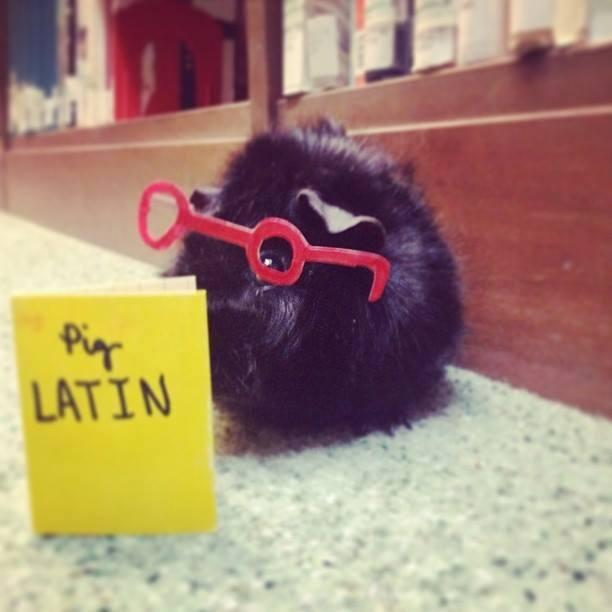 My name is Mustache the Guinea Pig and WPR helps me stay current and informed. Thank you WPR!