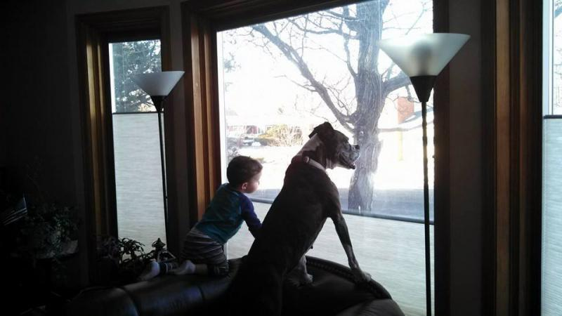 The Grandson and Angel, searching for squirrels.