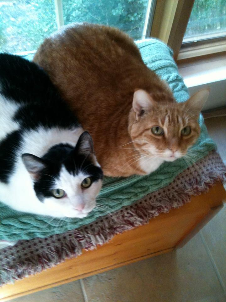 Tom and Louie chilling out and listening to WPR!
