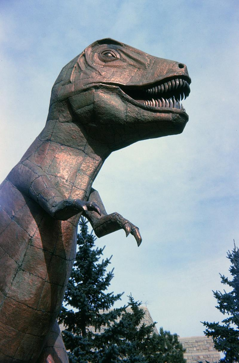 This Tyrannosaurus rex statue has guarded the front of the University of Wyoming Geological Museum for 50 years.