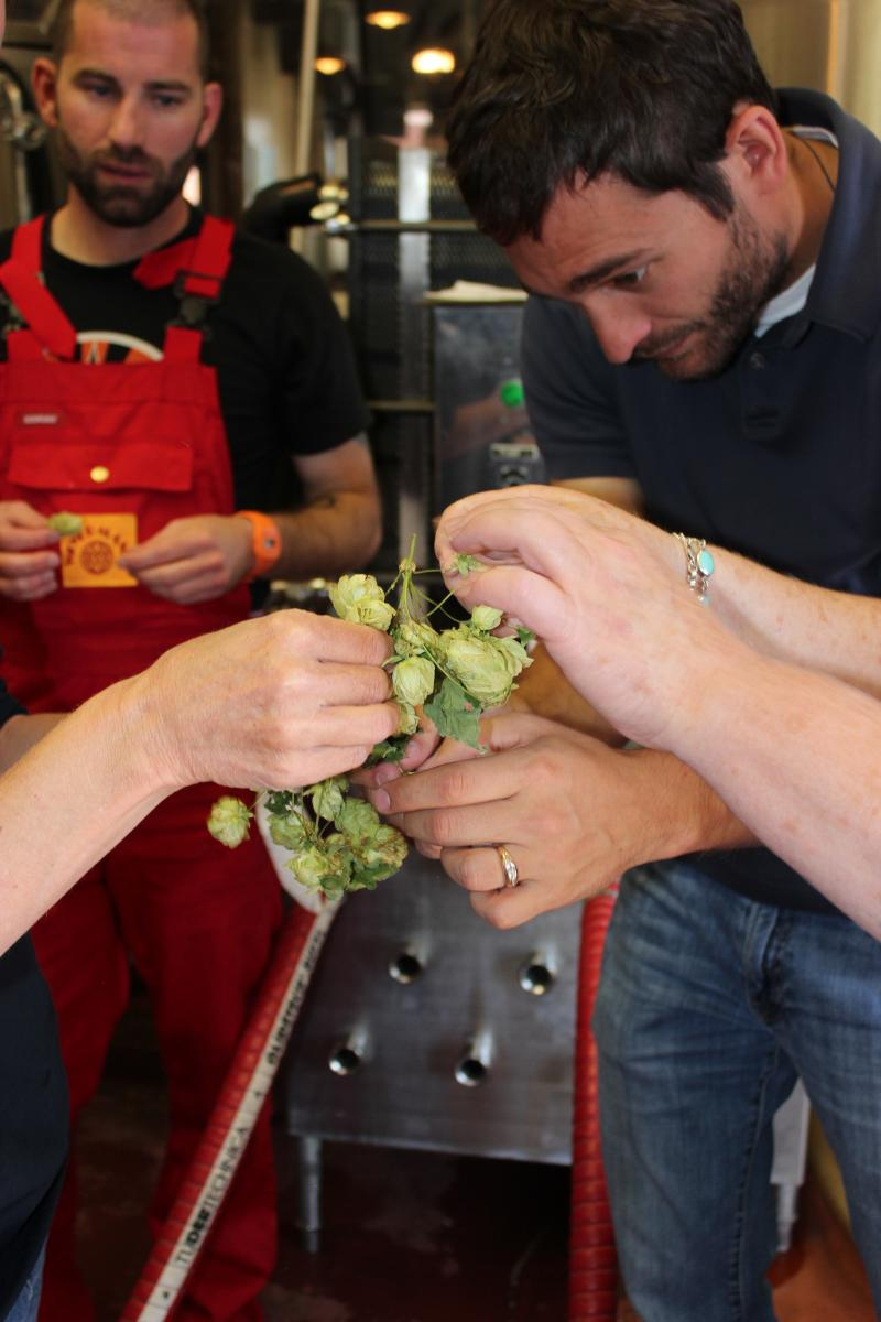 Sales Associate Ray Mitchell touching the hops.