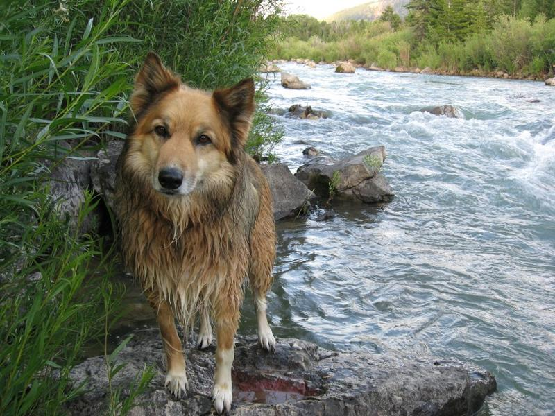 The Hoo Dog loved fly fishing and Pet Wednesday! We lost him to hemangiosarcoma on March 24th and we miss him greatly. Hug your pets every day.