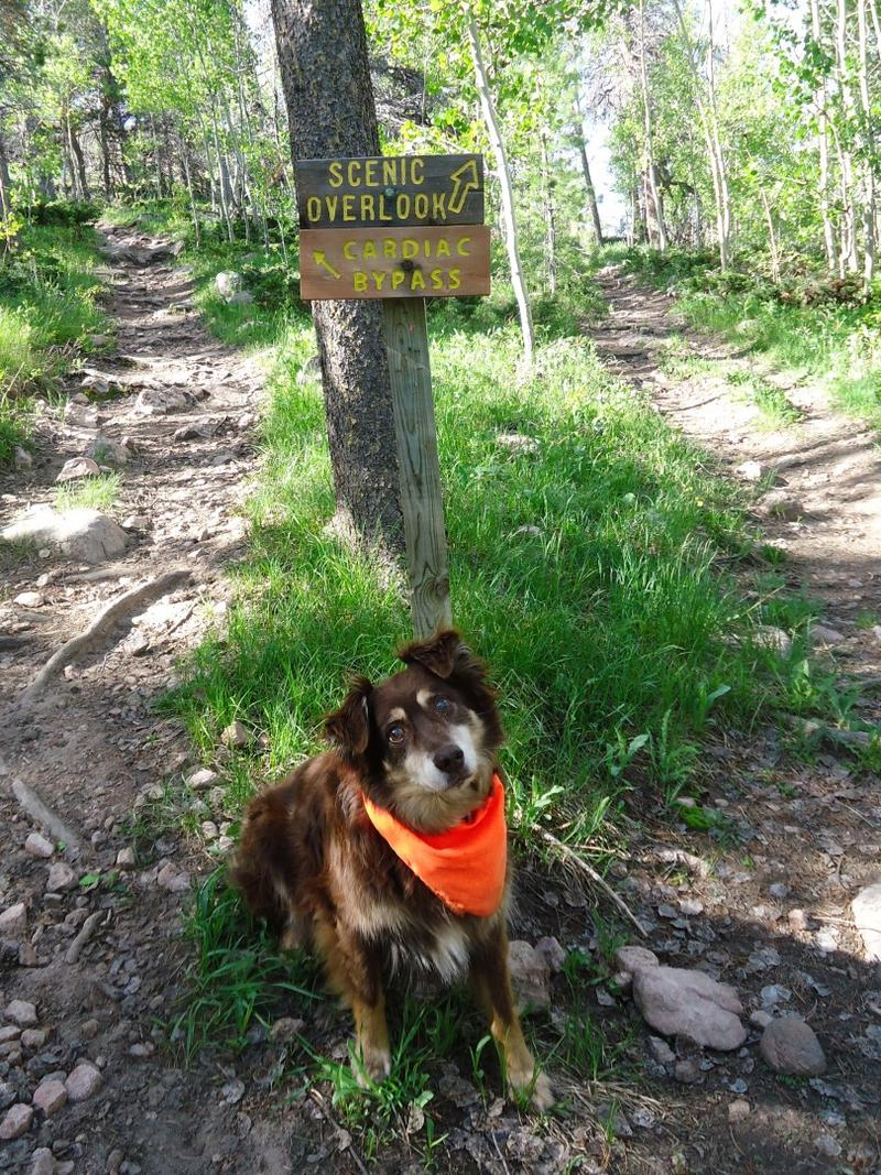 Coopie loves to listen to Wyoming Public Radio on our way up to run on the trails at Happy Jack.