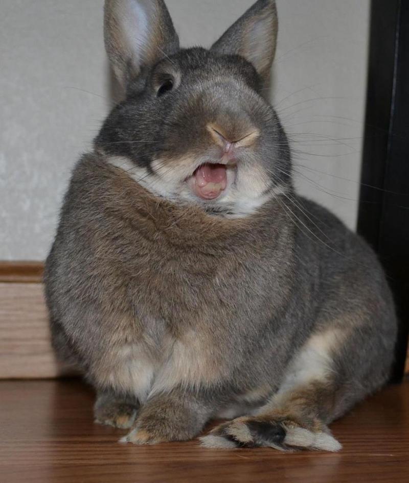 """""""nessun dorma...nessun dorma"""" -Luciano Pat-the-Bunny."""