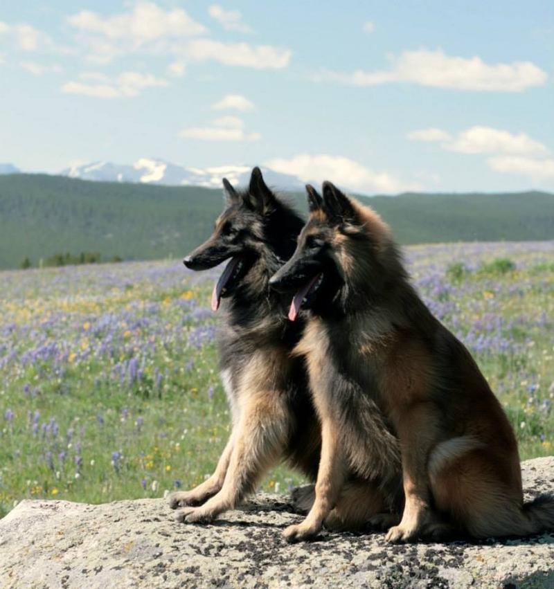 Kele and Camas in the bighorns.