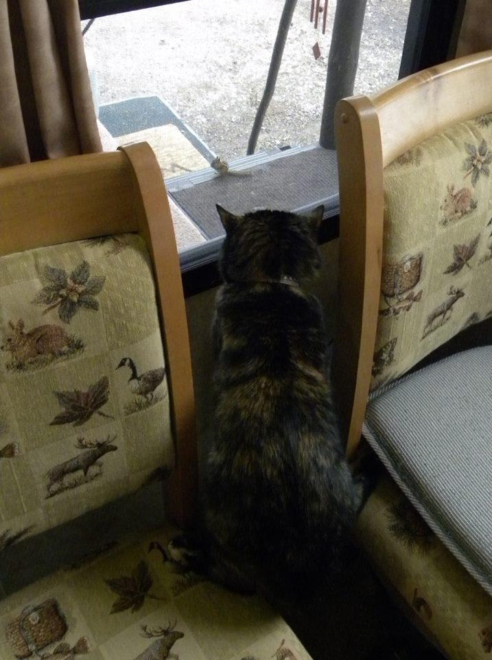 Teagan loves to watch the chipmunks on the porch.
