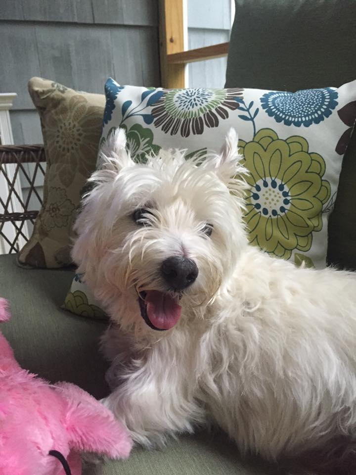 Susan McKeon Paterson and David Paterson pledged on behalf of their 4th child Finny. An adorable, mischievous westie!