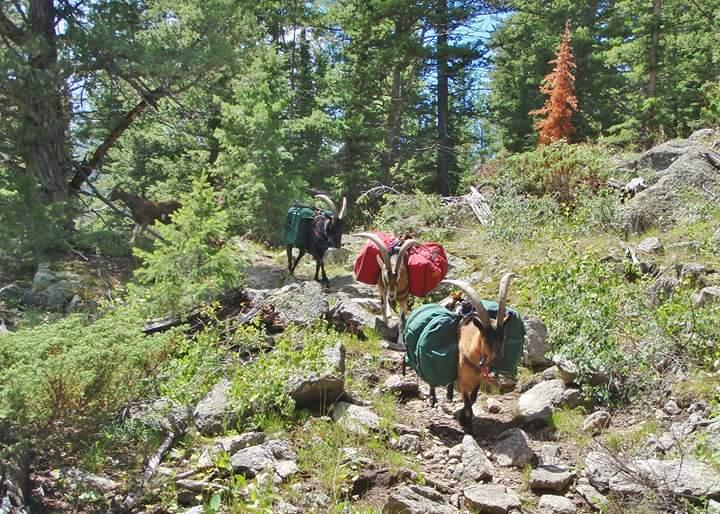 Here's a picture of Romeo, Wicket, Teddy, and little Rygel hiking in the Wind River Mountains this summer... When they're not on the trail, they're listening to Wyoming Public Radio, and they look forward to Pet Wednesday every pledge drive!