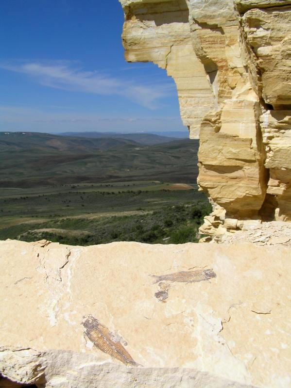 Fossil on the Ridge - Fossil Butte National Monument