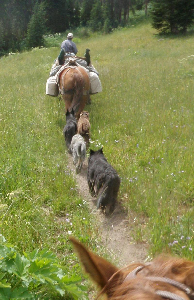 Iris, Sage, Bee and Grif - life is best when trotting down a trail .... Thank you Wyoming Public Radio!