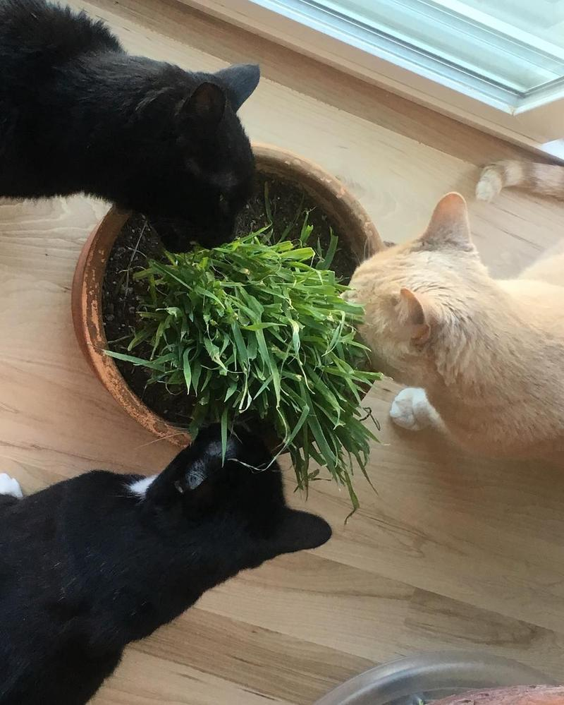 "Pet Wednesday is fabulous...and it makes me sentimental. Here are the three stooges enjoying a feast of catnip. And I miss our beloved Lars (a.k.a. ""The Fat Fat""). Oh how the love of a precious wild soul is like no other."