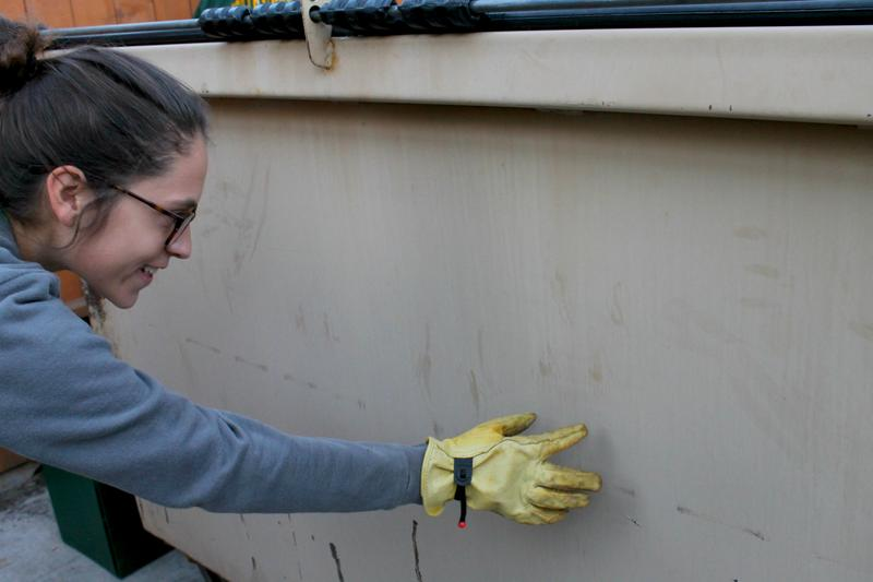 Rachel Fanelli shows how raccoons have left their mark on the public library dumpster.