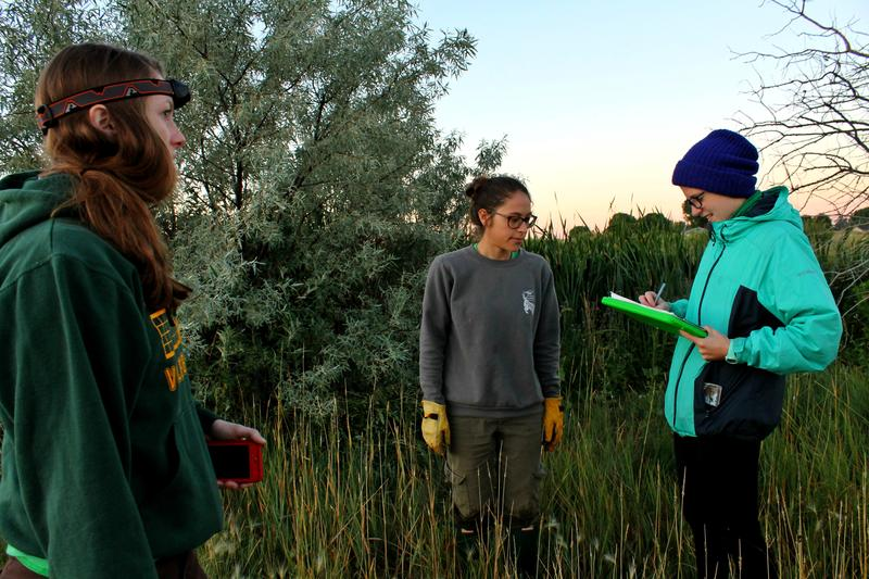 Team members Emily Davis, Rachel Fanelli, and Alix Wimberley record data in a field that houses one of their traps.