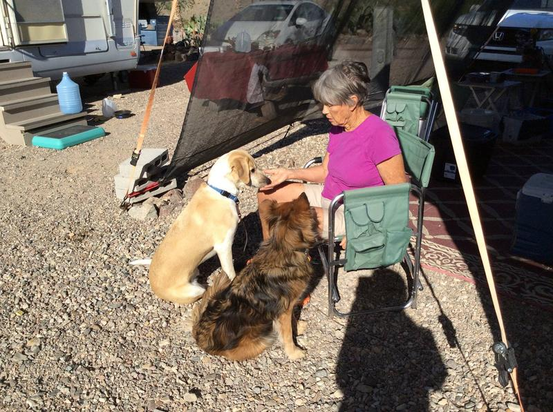 Quincy and Mocha are getting lessons on sharing. Quincy loves listening to Wyoming Public Radio even when she is wintering at Lake Havasu.