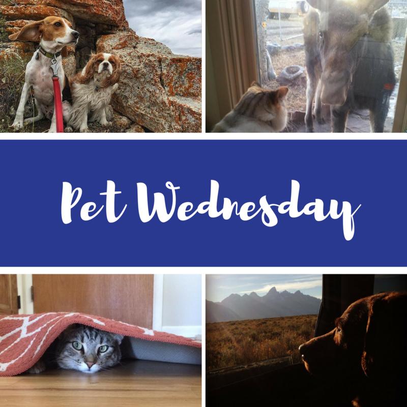 2017 Spring Membership Drive Pet Wednesday Wyoming