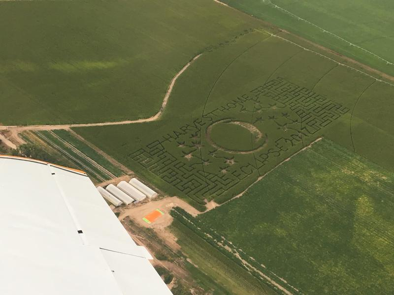 Special eclipse maze at the Ellis Harvest Home