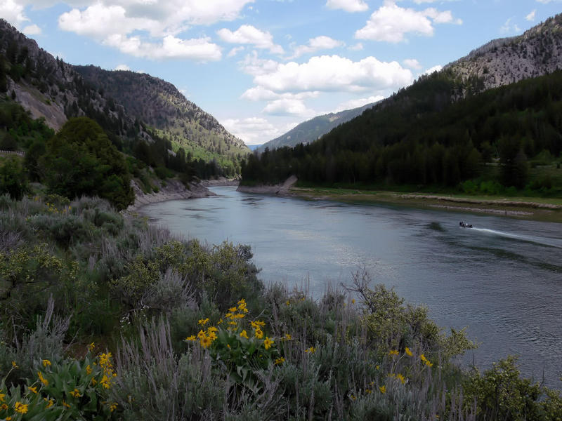 Snake River in the Snake River Canyon of Wyoming near Alpine