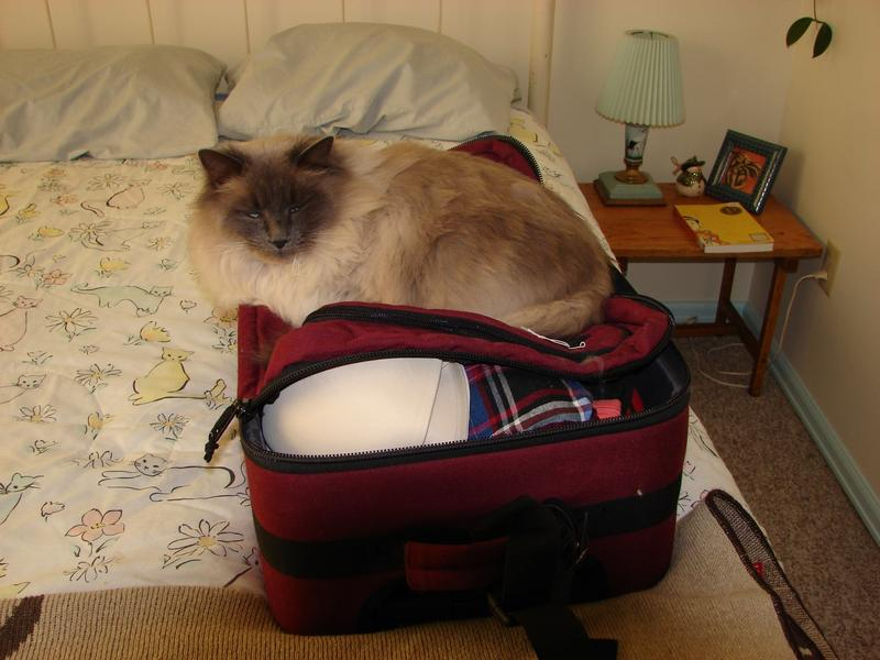 For Pet Wednesday, a picture of my cat Oscar who is ready to travel!