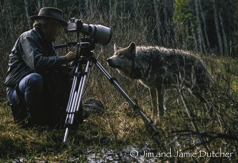 Jim Dutcher with alpha male Kamots.