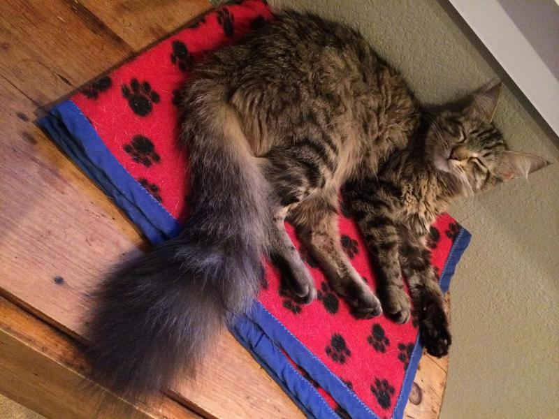 I just donated in honor of maine coon cat moon
