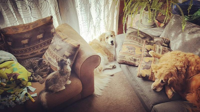 I just donated a little bit again to shout out to Joan and Ralph our shelter adopted cats from Jackalope City, WY and Winnie and Mabel (pyr/bernese and golden) #WPRPetWednesday
