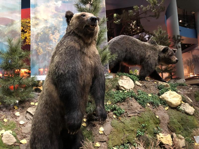 Bear 104 and her cub at the Draper Natural History Museum at the Buffalo Bill Center of the West.