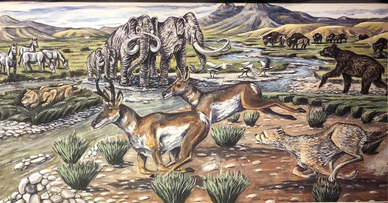 Drawing of animals during the Pleistocene Epoch in the Draper Natural History Museum.