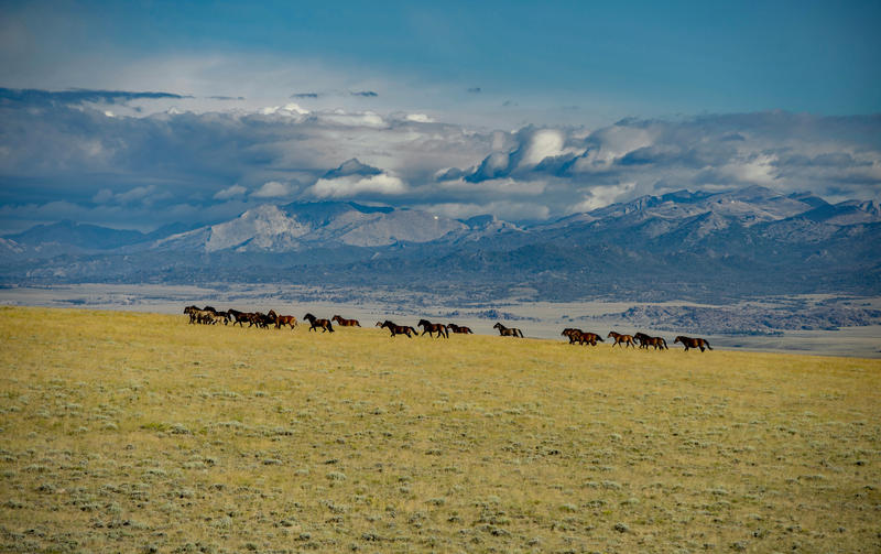 Mustangs and Windriver Mountains