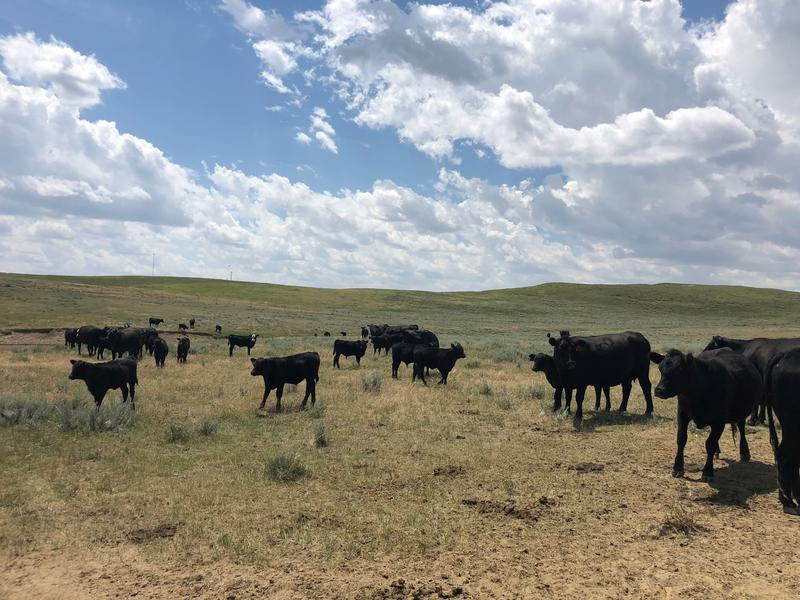Blockchain Technology Could Make Wyoming Beef A Premium